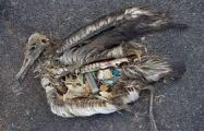 One sad example of the effects of our littering.